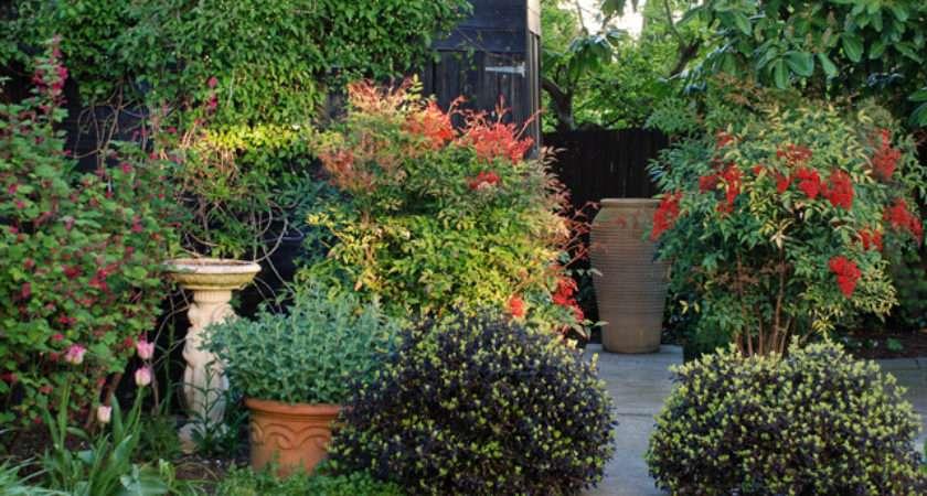 Back Garden Ideas Lisa Cox Designs Blog