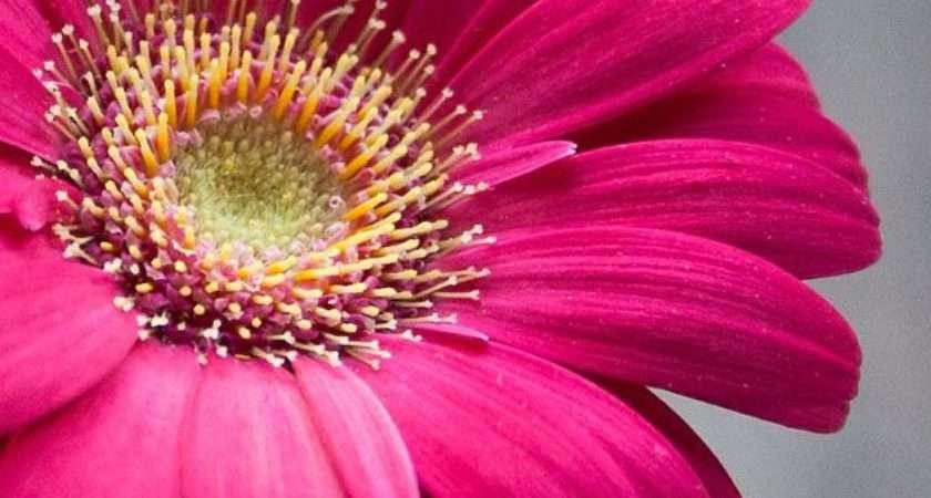 Best Flower Photography Ideas Pinterest Nature