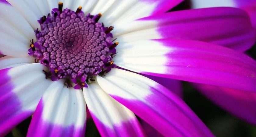 Best Flower Power Pinterest Exotic