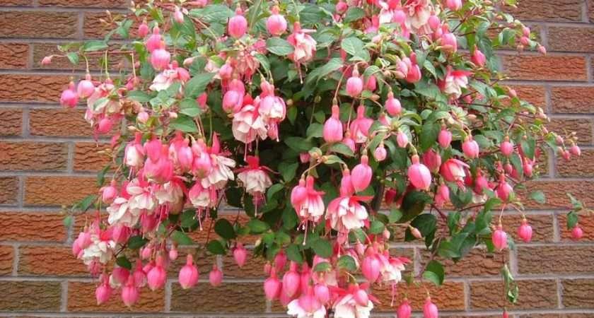 Best Flowers Hanging Baskets