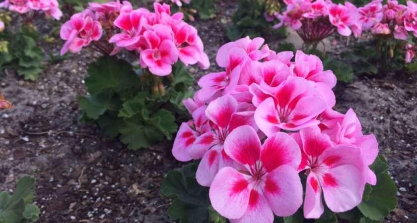 Best Flowers Plant Winter Bing