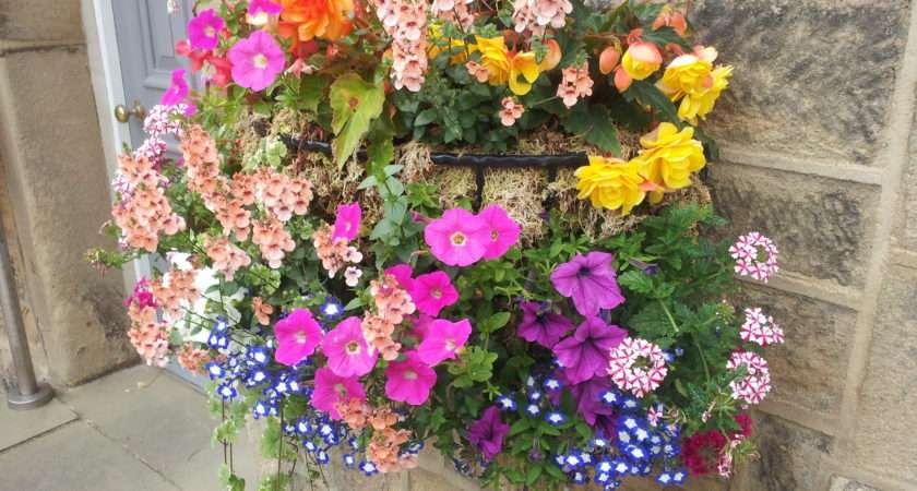 Best Plants Hanging Baskets Ideas