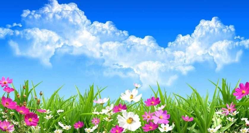 Best Summer Flowers Plant Mom Blog Society