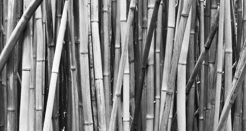 Black White Bamboo Quincy Dein