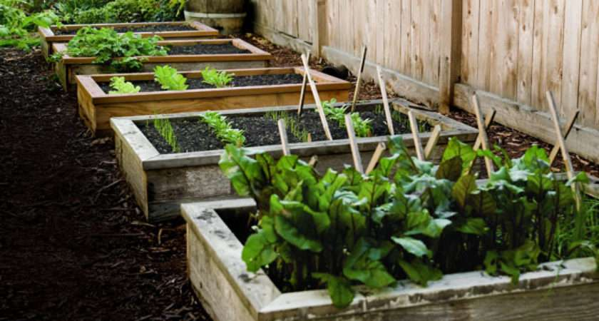 Build Raised Garden Bed Best Beds