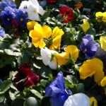 Color Scheme Wedding Decor Pinterest Schemes Colors