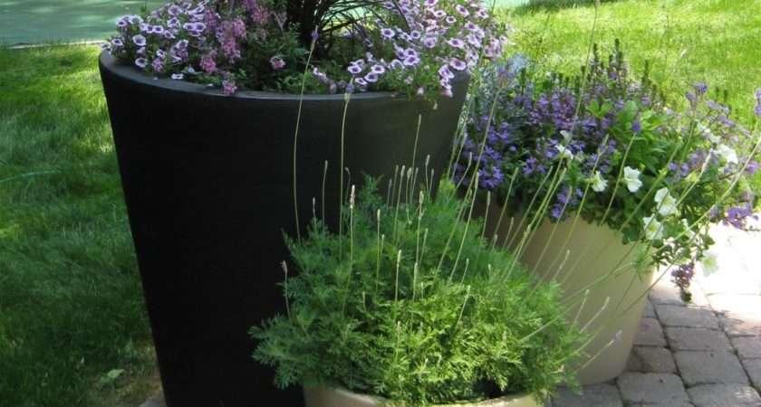 Container Garden Tips Fancy Flora