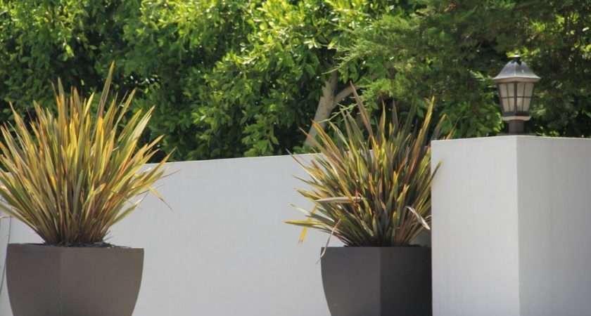 Containers Low Maintenance Plants