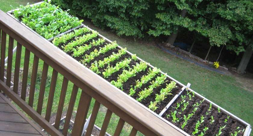 Cool Container Vegetable Gardens University Maryland Extension