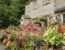 Creating Quaint Cottage Garden