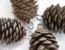 Cute Pine Cone Ornament Christmas Decor