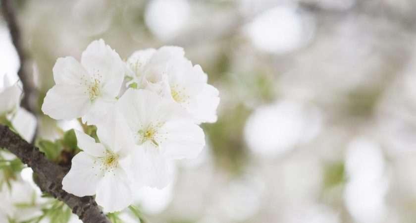 Deanne Morrison White Flower