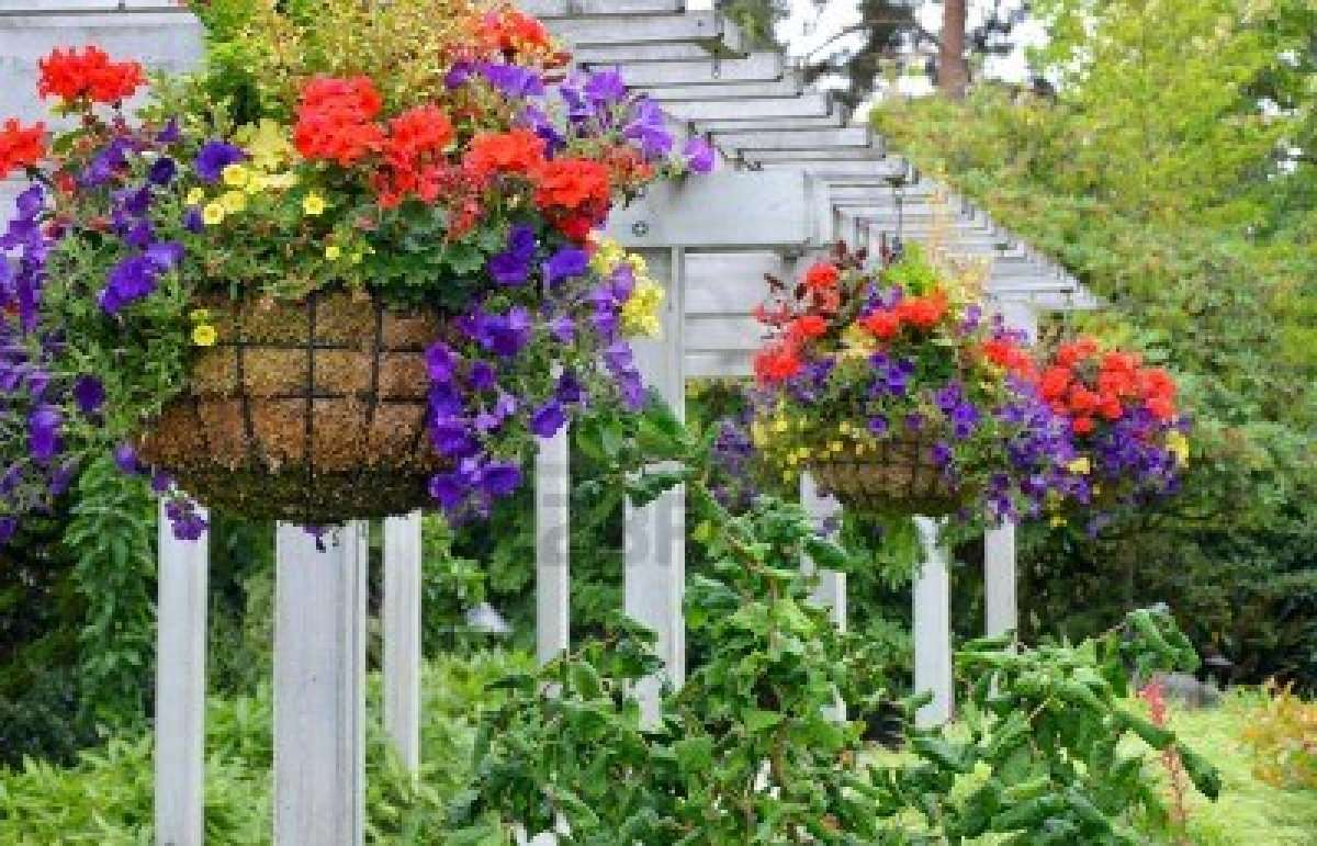 Design Create Grow Your Very Own Unique Hanging Basket
