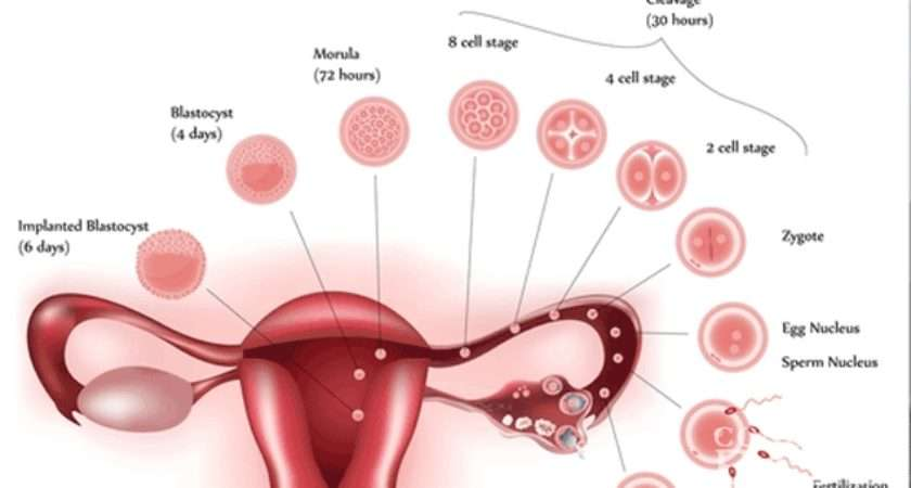 Difference Between Implantation Bleeding