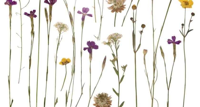 Diy Flowers Press Floraqueen Blog