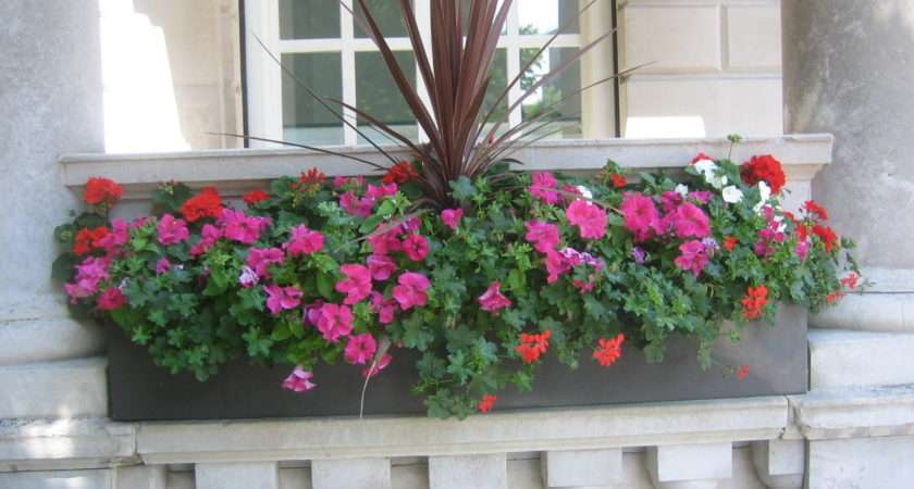 Exterior Window Boxes Plantforce Office Plants London