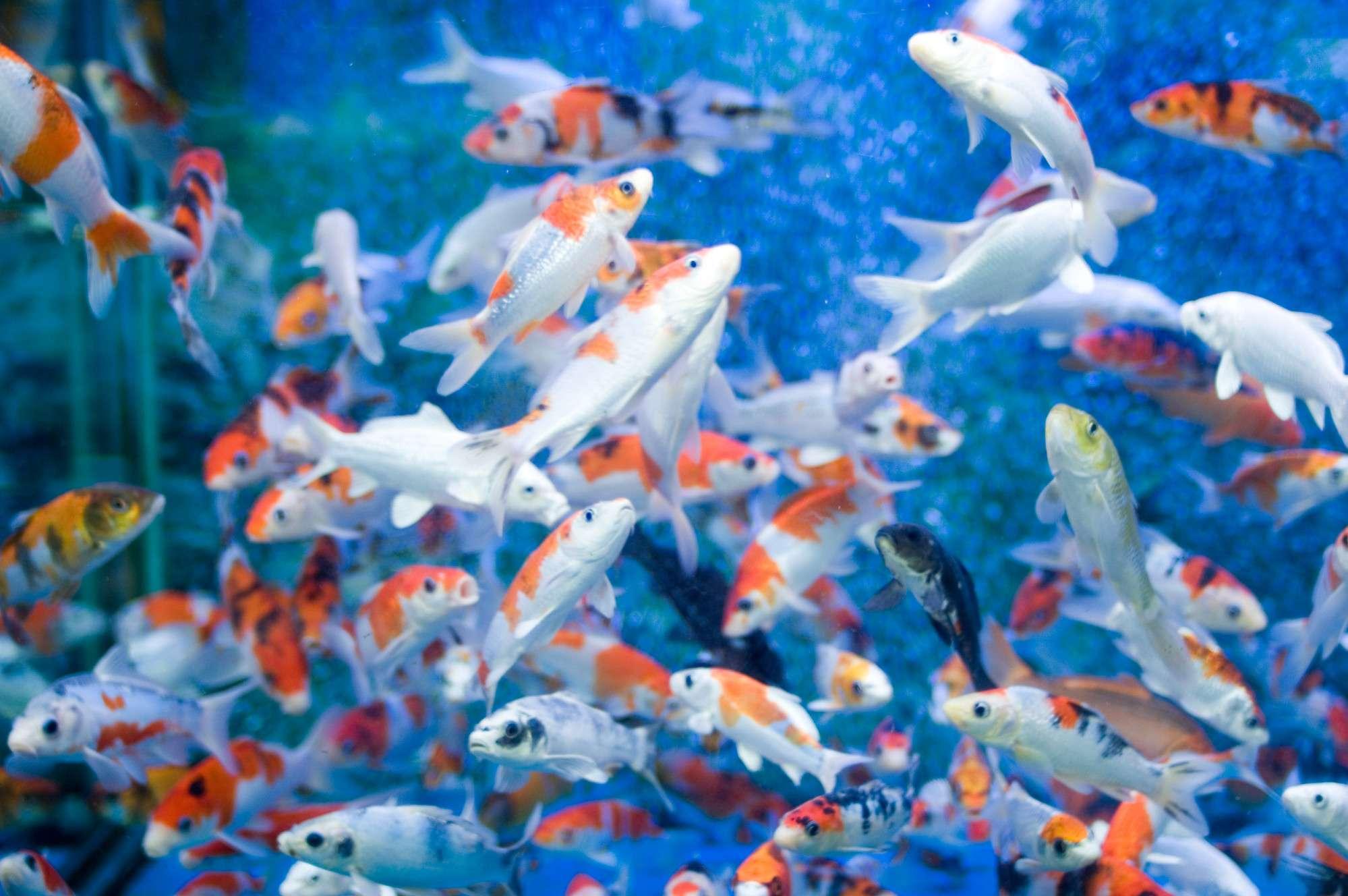 Fish Large Tank