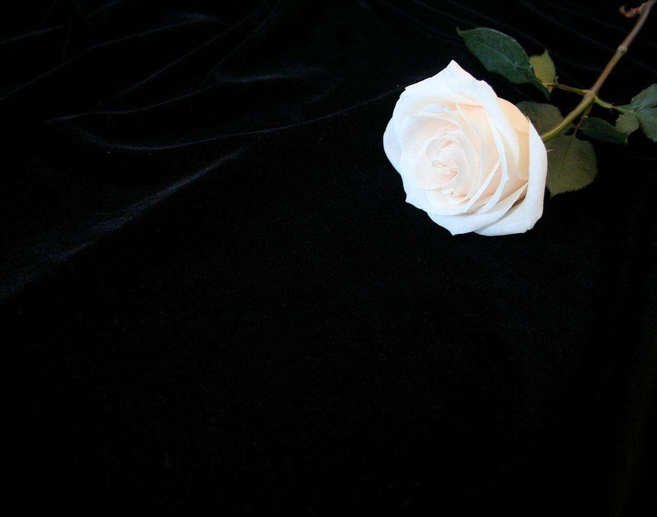 Floral Black Cool