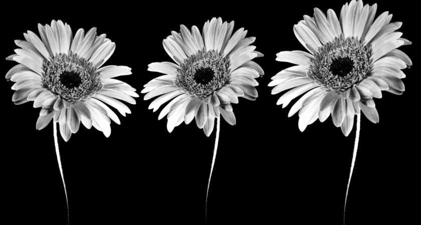 Flower Black White Clip Art Flowers Clipart Clipgoo