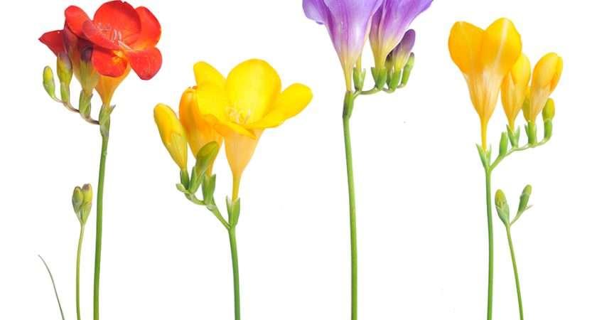 Flowers Pressing Make Your Last Longer