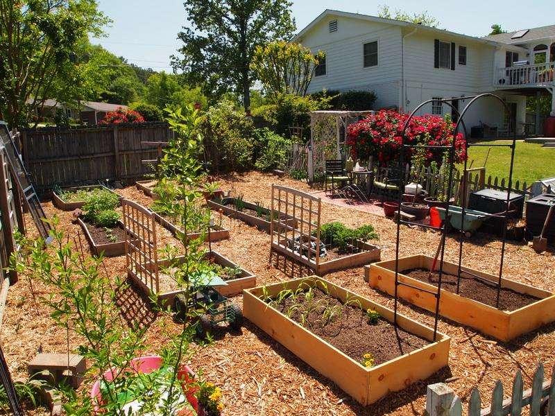garden ideas backyard vegetable