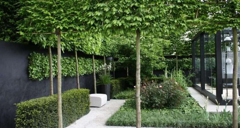 Garden Screening Pleached Stilted Trees