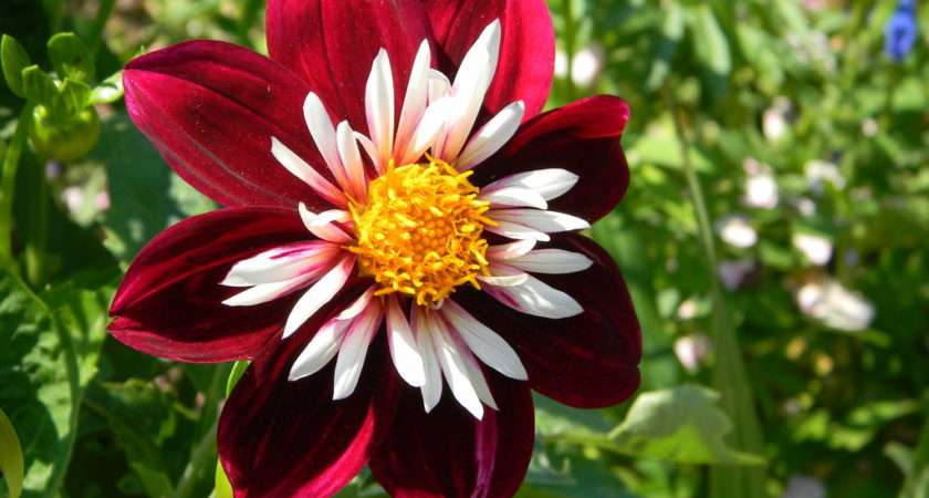 Growing Best Flowers Town Landscaping Gardening