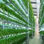 Growing Hydroponically Capitalize Indoor Gardening