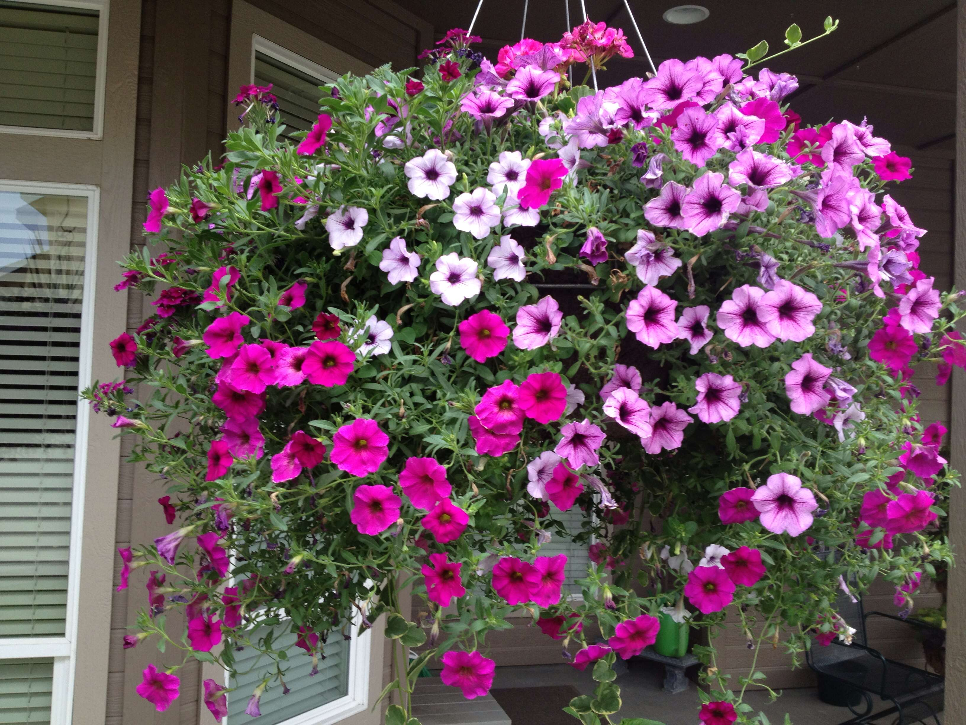 Hanging Basket Container Garden Ideas Pinterest