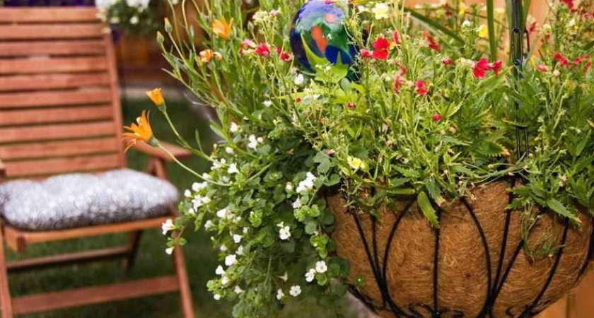 Hanging Basket Flowers Delivered