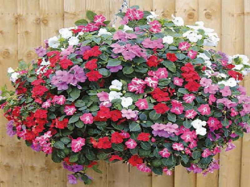 Hanging Basket Flowers Plant Baskets