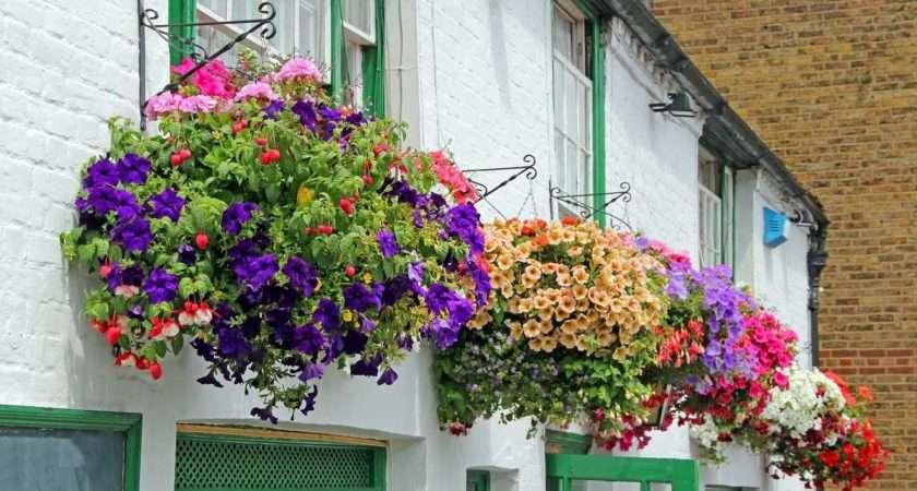 Hanging Basket Ideas Garden Life