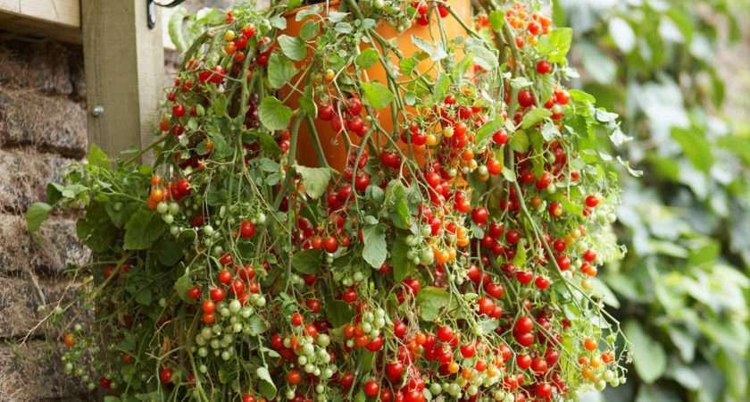 Hanging Basket Ideas New Planting Fabulous