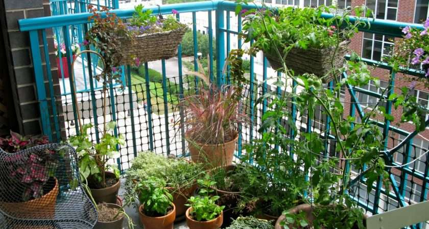 Herb Container Garden Source Lifeonthebalcony