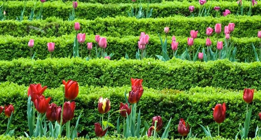 High Quality Spring Flower Garden
