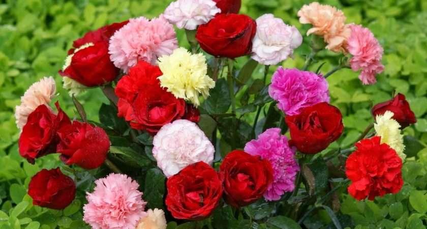 Hot Girl Best Flower