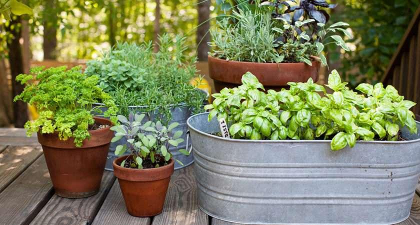 Ideas Your Garden Mybktouch