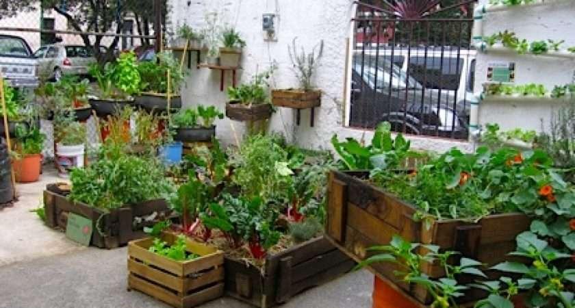 Interior Ideas Urban Garden Photos