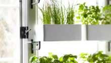 Kitchen Herbs Mere Life