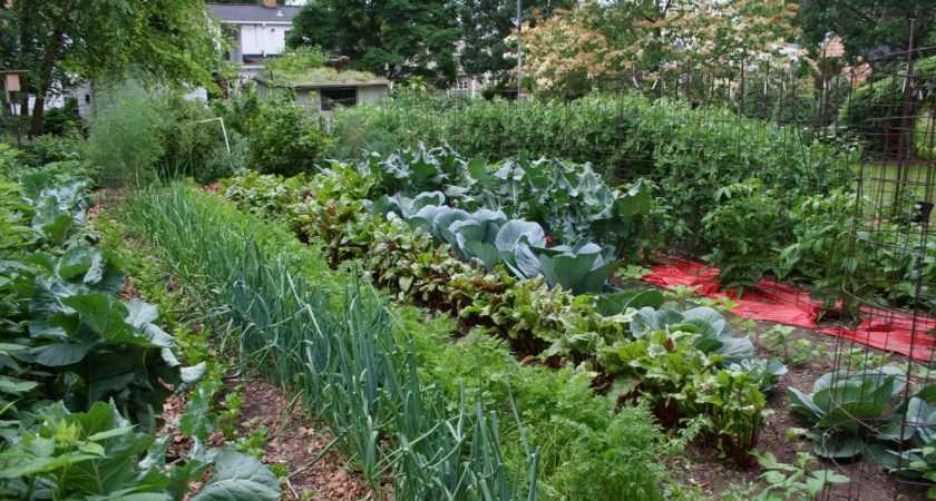 Large Vegetable Garden Notes Northern Gardenernotes