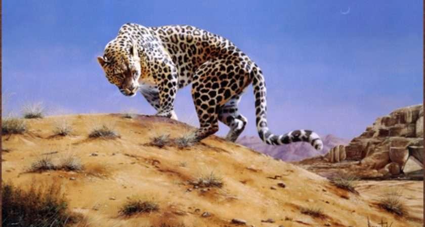 Leopard Amp Becuo Snow