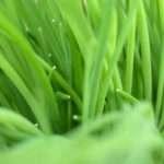 Lime Green Black Hdblackwallpaper