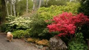 Low Maintenance Planting Design More Than Just Plant Selection
