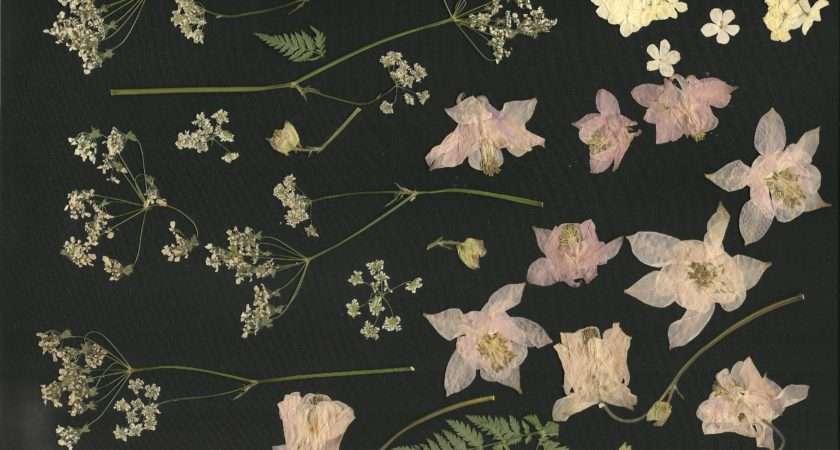 Make Flower Press Dried Crafts