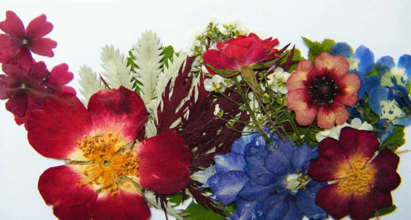 Modern Dried Flowers Flower Crafts