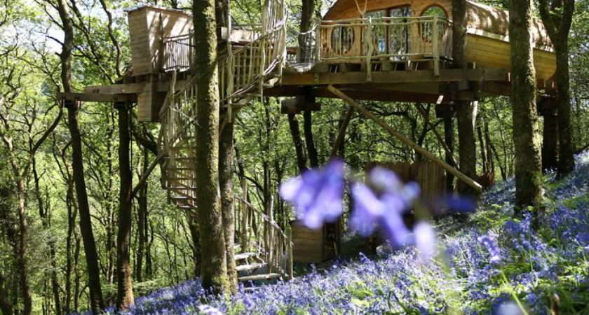 Most Beautiful Tree Houses All Over World