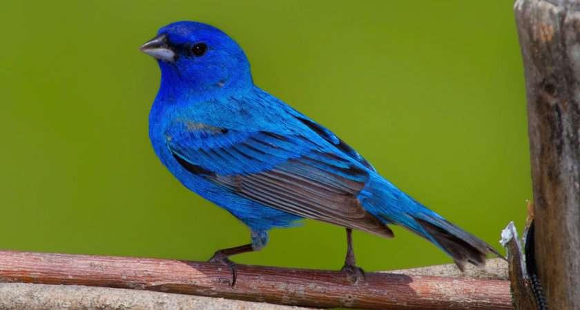 Our Top Spring Migratory Birds Tara Vicksburg Birding