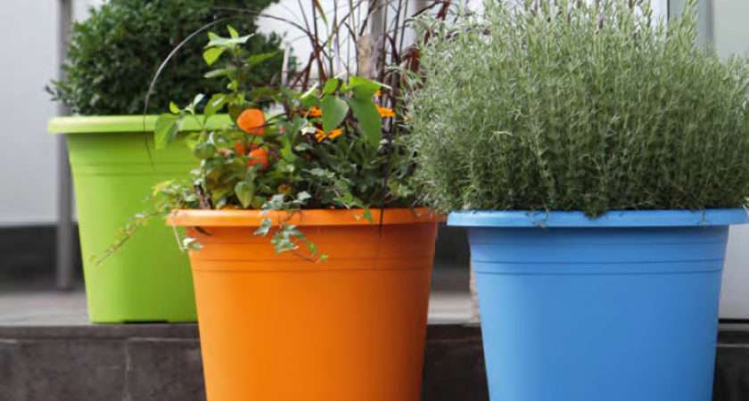 Outdoor Pots Cylindro Blooming Plant