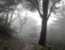 Park Grey Fog Nature
