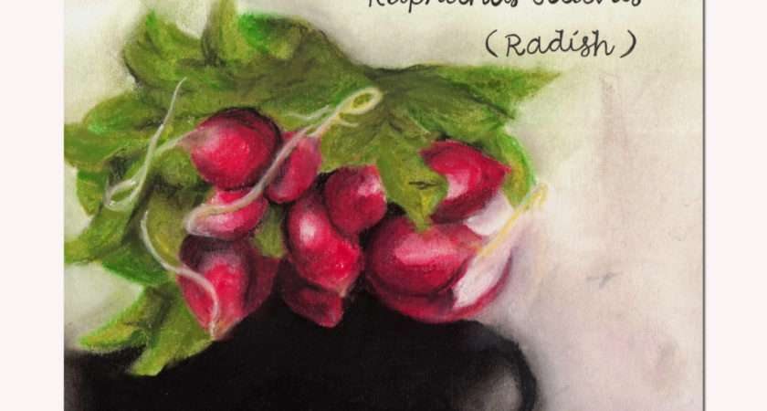 Pastel Drawings Kitchen Decor Vegetable Art Samiamart